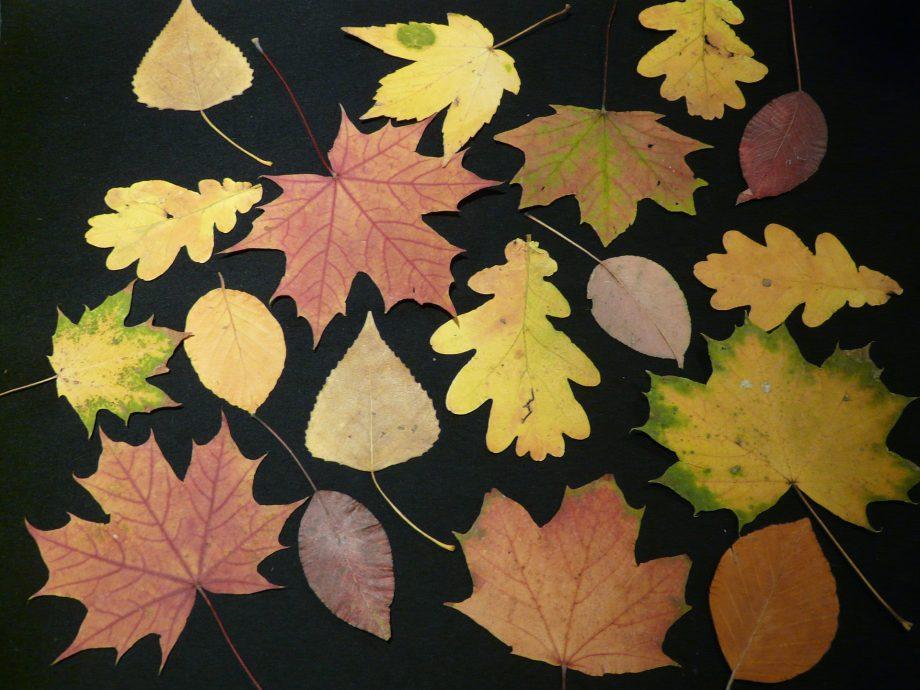 In diesem Blogpost erfährst du, wie du mit deinen SuS ein Herbarium anlegst