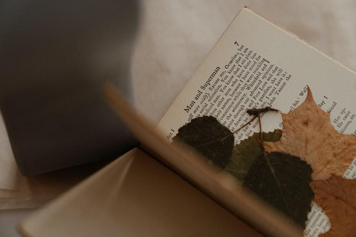 Einige gepresste Blätter liegen zwischen einer Buchseite.